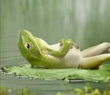 frogchilling